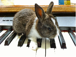 Bunny on the Keys